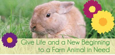 farm-adoption