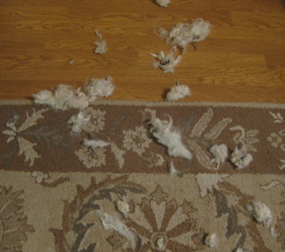 destroyed-alpaca