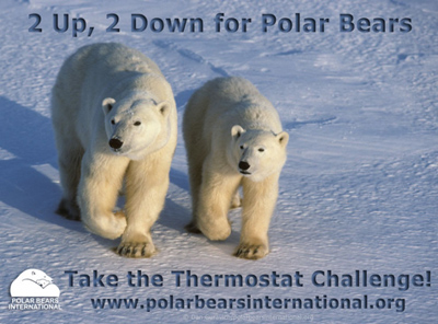 polar-bear-international