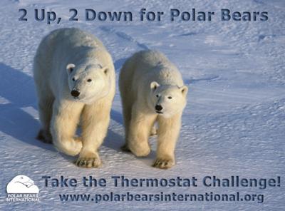 polar-bear-international