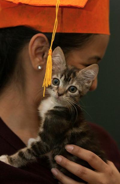 kitten-graduation