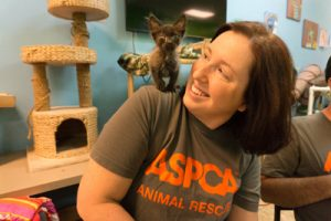 aspca-cat-rescue-nc