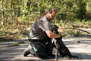 aspca-matthew-dog-rescues-nc