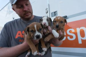 hurricane-matthew-rescues-aspca-dogs